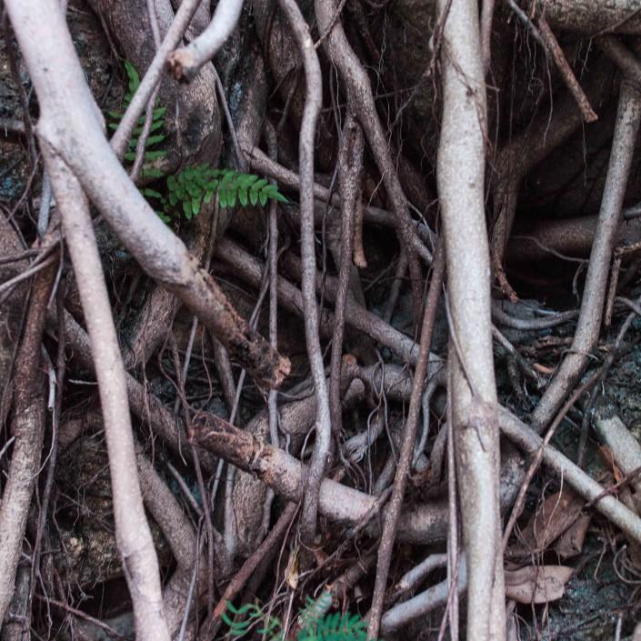 Hong Kong Roots